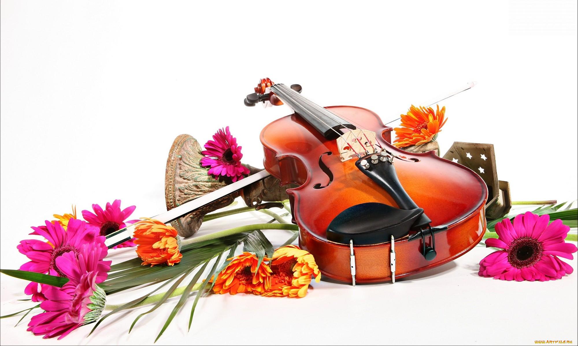 Картинка скрипка и цветы